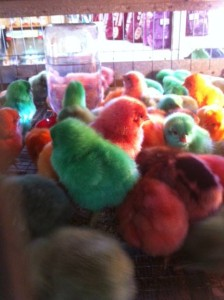 Easter Chicks Holiday Items