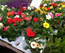 Nursery and Gardening supplies, plants, trees, shrubs, Aberdeen MS, Amory Ms, Okolona Mississippi, Monroe County, Nettleton