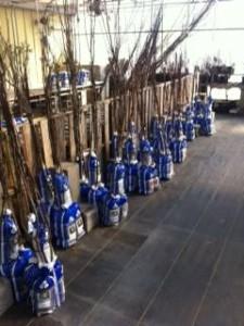 Nursery Gardening Tree Mattox
