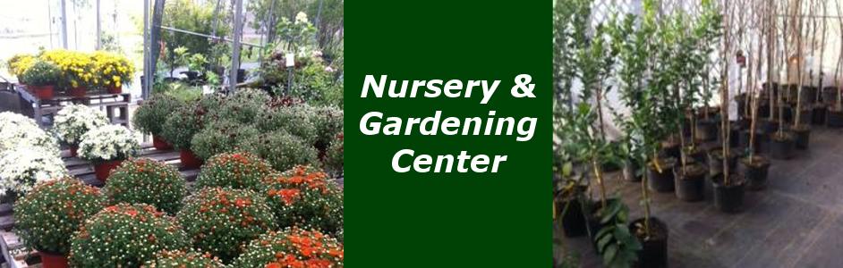 Mattox Nursery and Gardening Center Aberdeen Mississippi