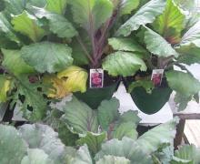 Nursery and Gardening supplies, plants, trees, shrubs, Aberdeen MS, Amory Ms, Okolona Mississippi, Monroe County, Nettleton