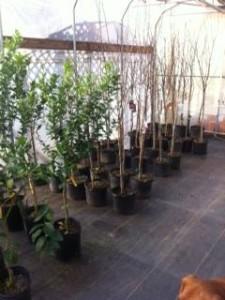 Nursery Gardening Mattox 1